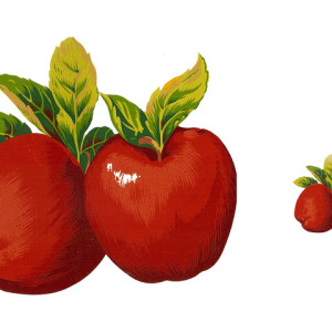 Suured õunad 88x64