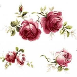 Juubeli roos