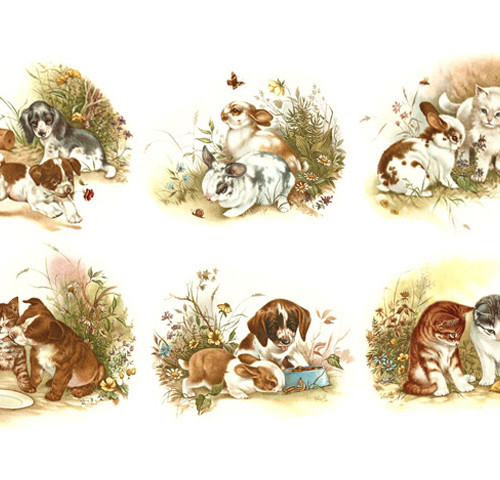 Lemmikloomapojad