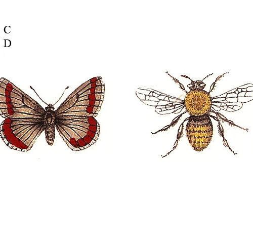 liblikas ja mesilane