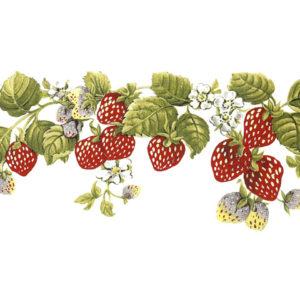 maasikatass