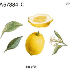 sidruni lehed oied