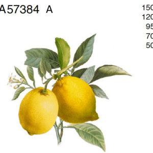 sidrunid